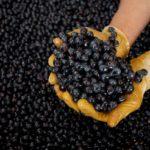 Luce in Montalcino: Jahrgang 2017 ist im neuen Weinkeller