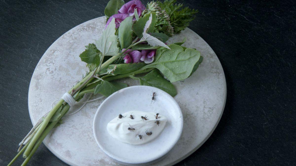 Noma: Das beste Restaurant der Welt