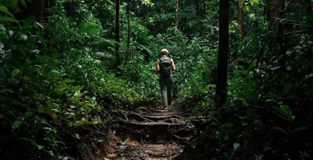 Diese zwölf Kandidaten ziehen ins Dschungelcamp 2020