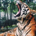 Tiger King: Exotic verliert Zoo