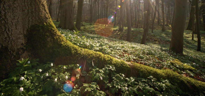 """Dokumentarfilm: """"Das geheime Leben der Bäume"""""""